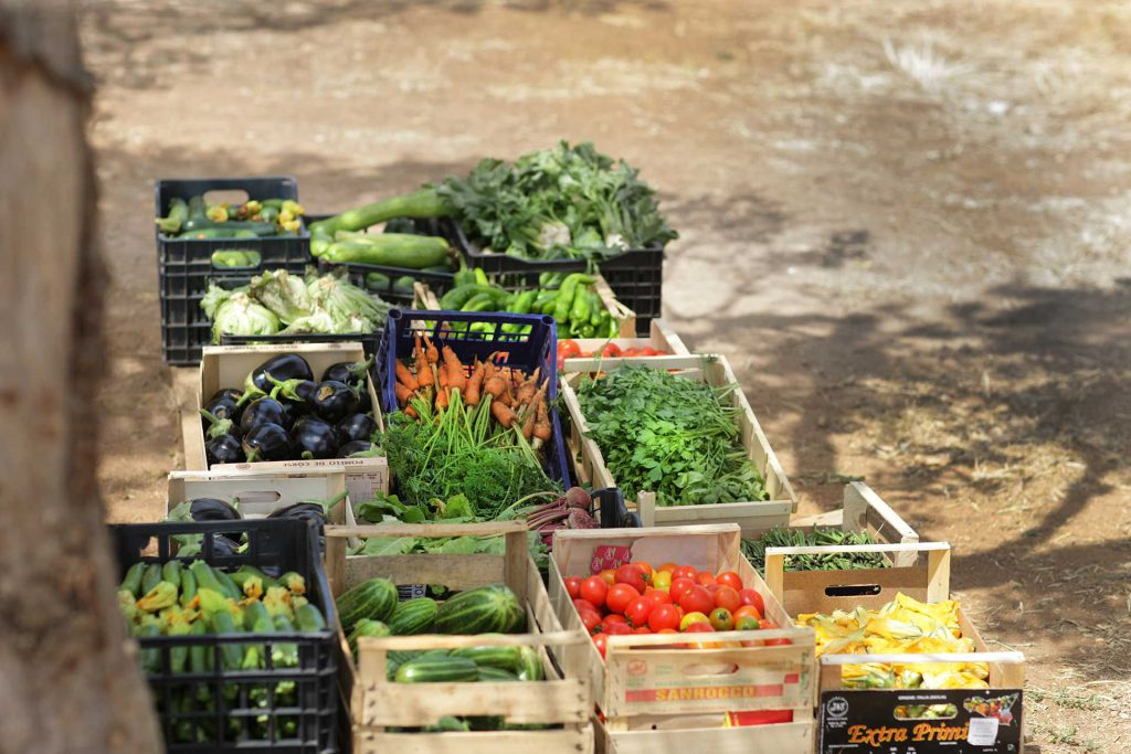 Masseria Ogliastro, our organic farm 03